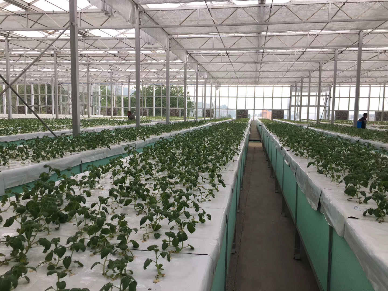 布拖县高架薄膜温室大棚销售安装成功案例
