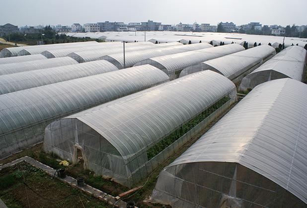 怎么让四川薄膜温室大棚的坚固性加强?