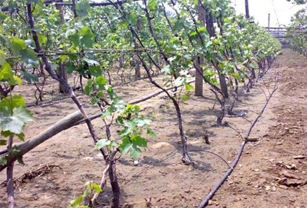 四川节水灌溉是通过什么样的方式实现的呢?