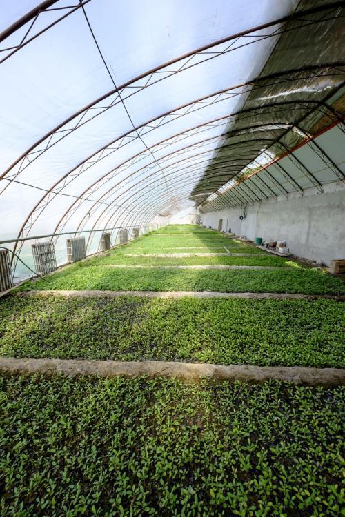 浅析什么是四川温室大棚及其它的作用