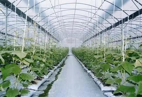 四川温室大棚建设需要注意事项有哪些?