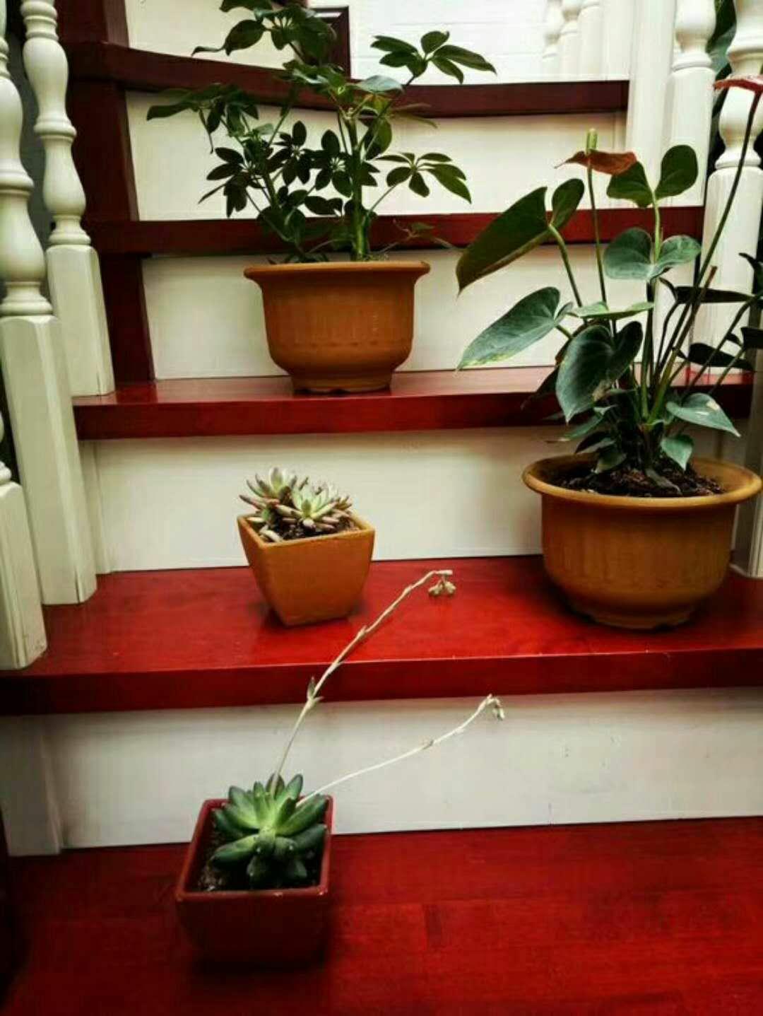 陝西環保型花盆設備廠家介紹新型懸掛式會呼吸的花盆