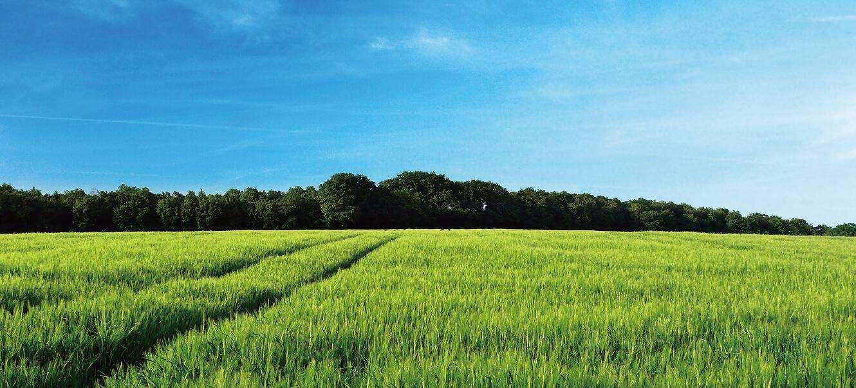 河南周口小麦实验田
